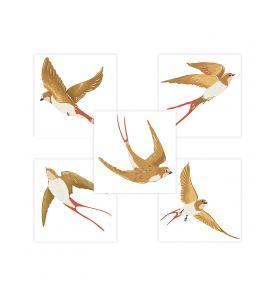 Swallow - Set de 5 planches