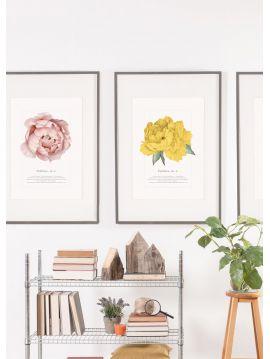 Set de 2 posters Paeonia Jaune & Rose