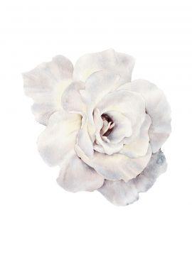 Paeonia Rose Design