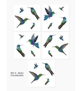 Colibris - Blue