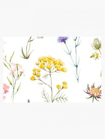 Herbier - échantillon