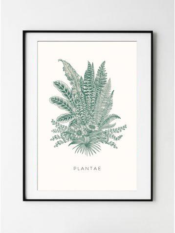 Poster Plantae