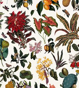 Fleurs d'Antan