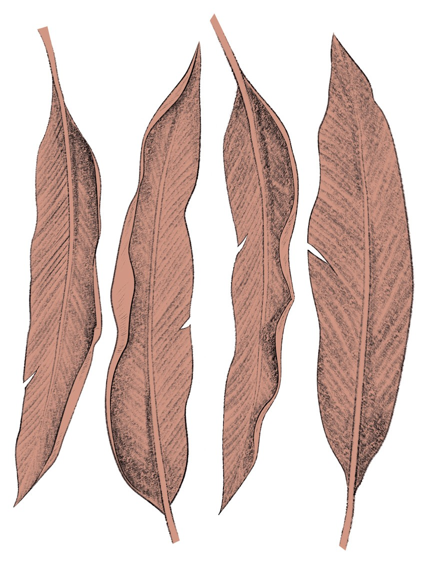 0506 Leaf