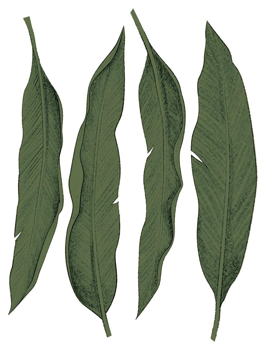 0508 Leaf vert